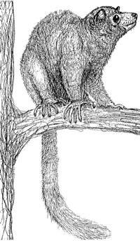 monos en europa Europolemur
