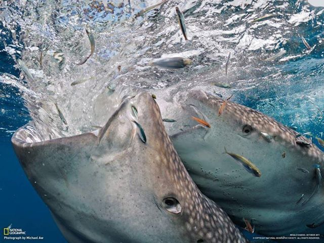 Amazing Animals Pictures: The largest fish species. The ...