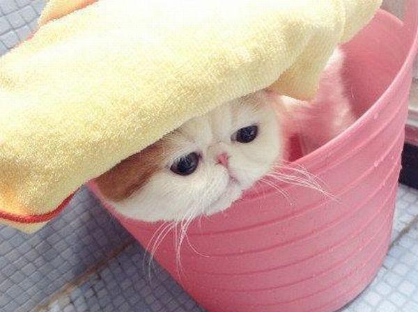 gambar kucing lawak giler - gambar kucing - gambar kucing lawak giler