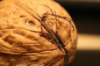 walnut, abstract,