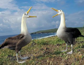 gambar albatross yang homo-Binatang-Binatang dan hewan Yang Homo di dunia - munsypedia | un1x project
