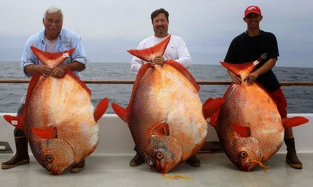 International fishing news 2014 08 for Plenty of fish hoes