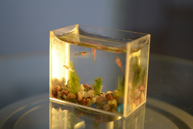 Conheça o menor aquário do mundo