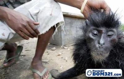 Monyet Panggang !
