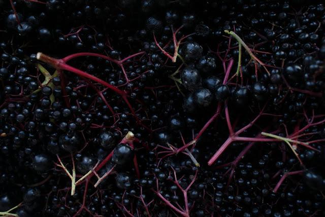 elderberry aronia sirup. Black Bedroom Furniture Sets. Home Design Ideas
