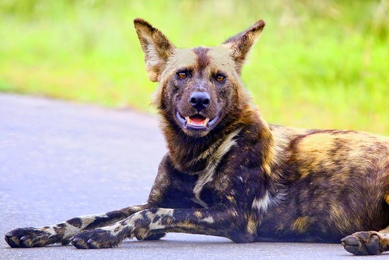 welke dieren gaan eerder dood hond of kat