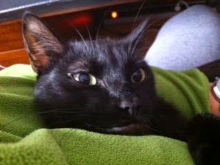 Mi gato Coque