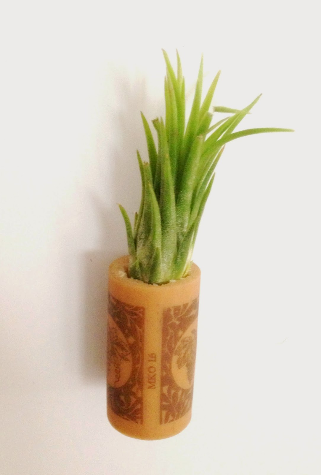 Air Plant Cork Magnet // The Twisted Horn