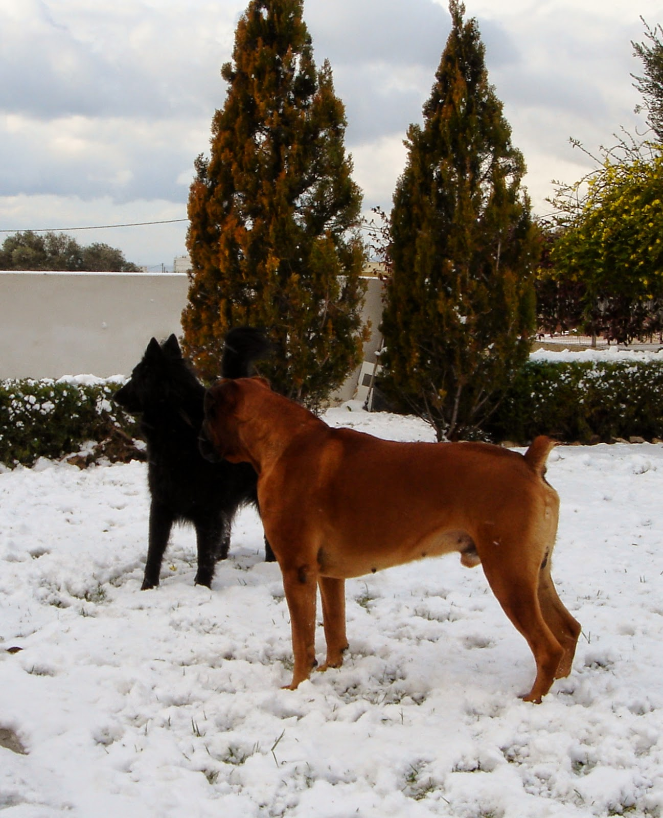 Ziggy & Amos in the snow