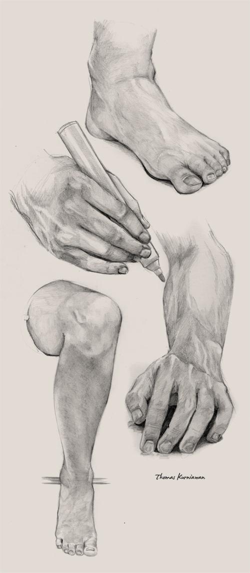 thomas kurniawan u0026 39 s portfolio  drawing model human