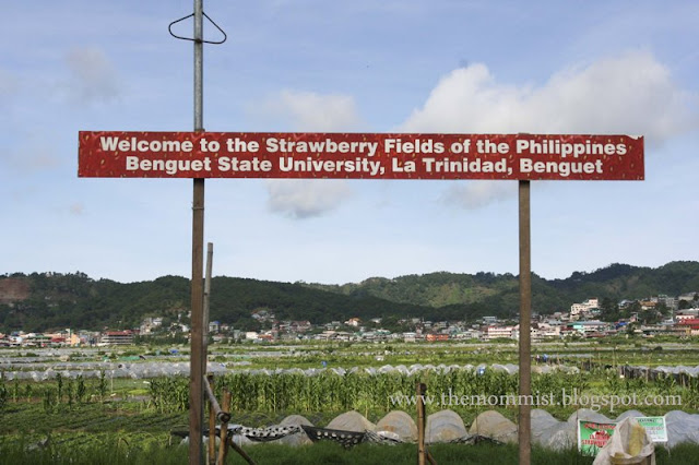 Strawberry fields' welcome sign at The Strawberry Farm Benguet