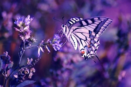 beautiful butterfly hd desktop - photo #42