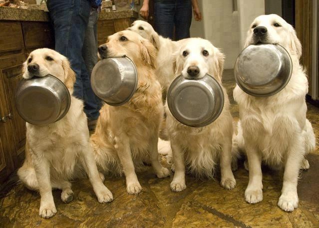 Dogs' dinner time, funny dogs, dog photos, dog pictures