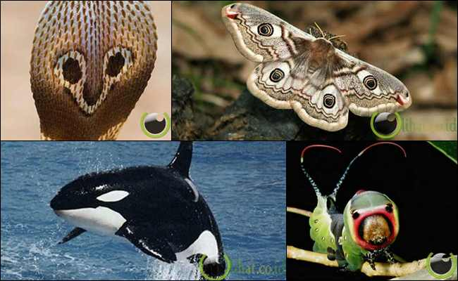 5 Hewan yang Mempunyai Mata Palsu