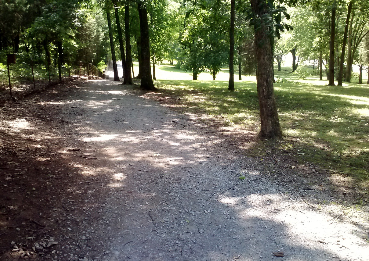 walking trail on beautiful day #exercise