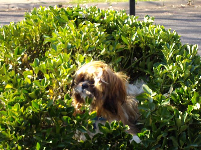 Tofi en los arbustos