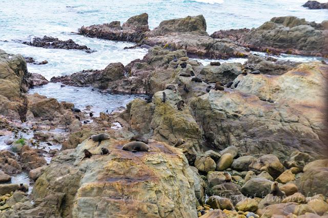 Kaikoura Ohau Point Lookout