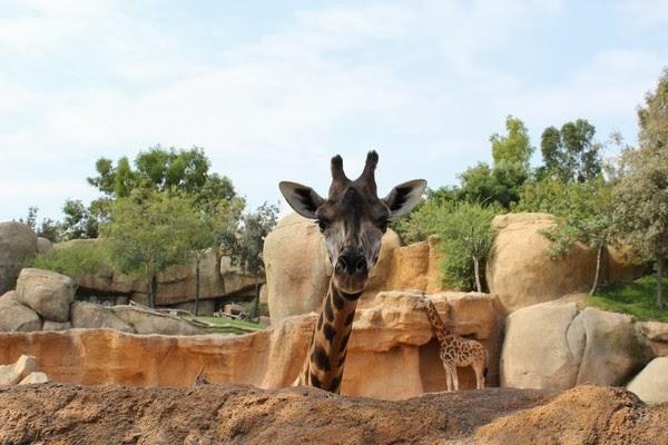 Zoo Walencja