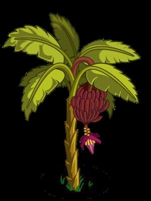 Pohon Pisang Daunnya Layu Gambarlin
