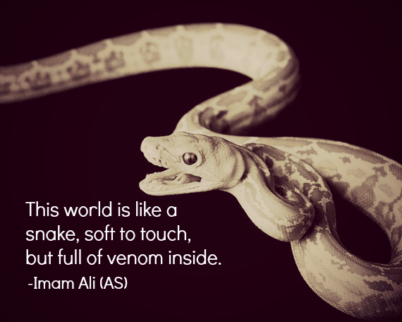 This world is like a snake, soft to touch, but full of venom inside.