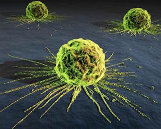 El proceso Inmunológico