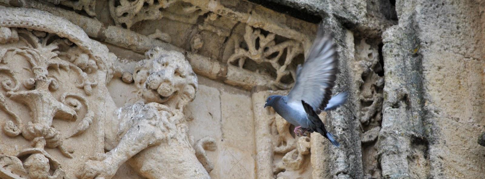 inocente chinesse pecho grande en Cádiz