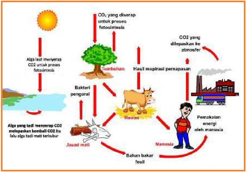 Lks Siklus Karbon