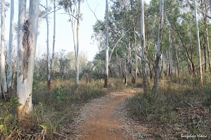 The trail in Turahalli Forest