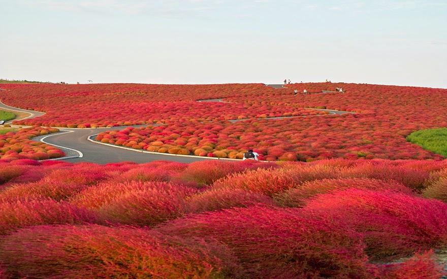 تحكي جمال وروعة الخريف autumn11.jpg