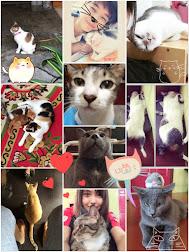 I ♥ Cat!!!