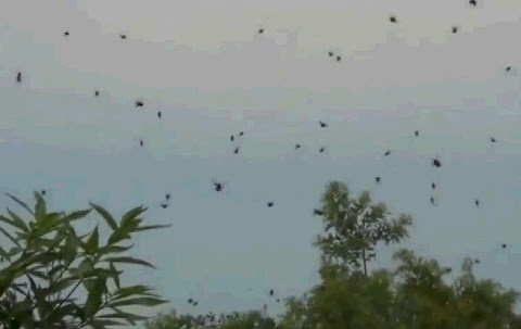 Fenomena Hujan Laba-laba di Brasil
