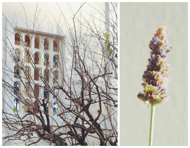 Architecture, Art, Getty Villa, Lavender
