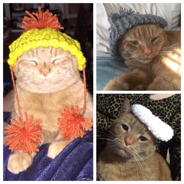 Девушка вяжет коту шапки