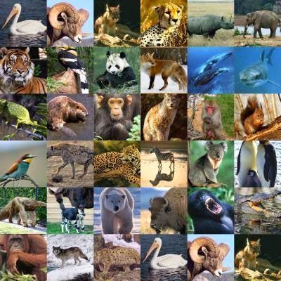 أنواع من الحيوانات والنباتات مهددة بالانقراض