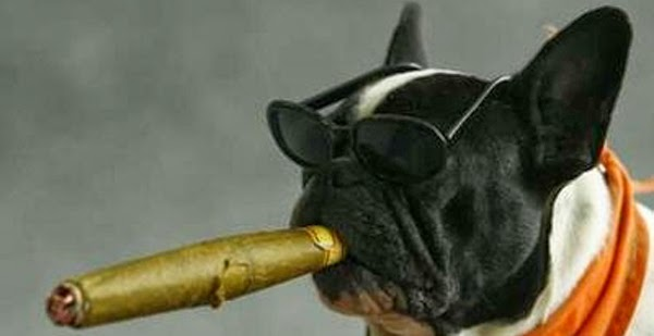 Dog with a cigar