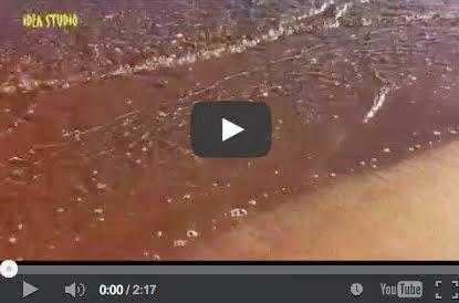 Ψίθυροι στην ακροθαλασσιά - Sea shore whispers