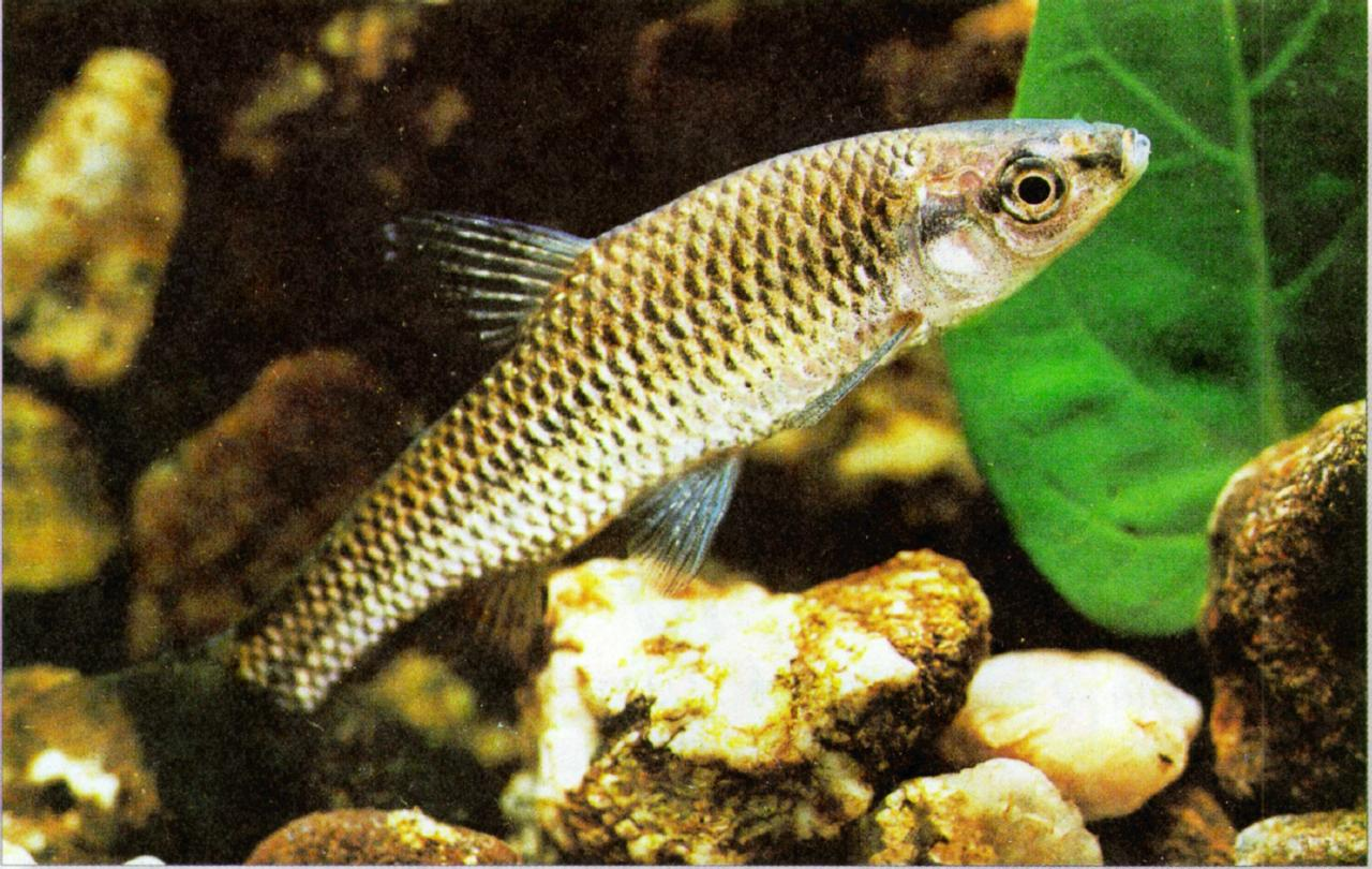Avenger blog: freshwater fish pictures