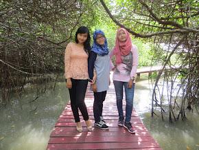mangrove merah, rembang