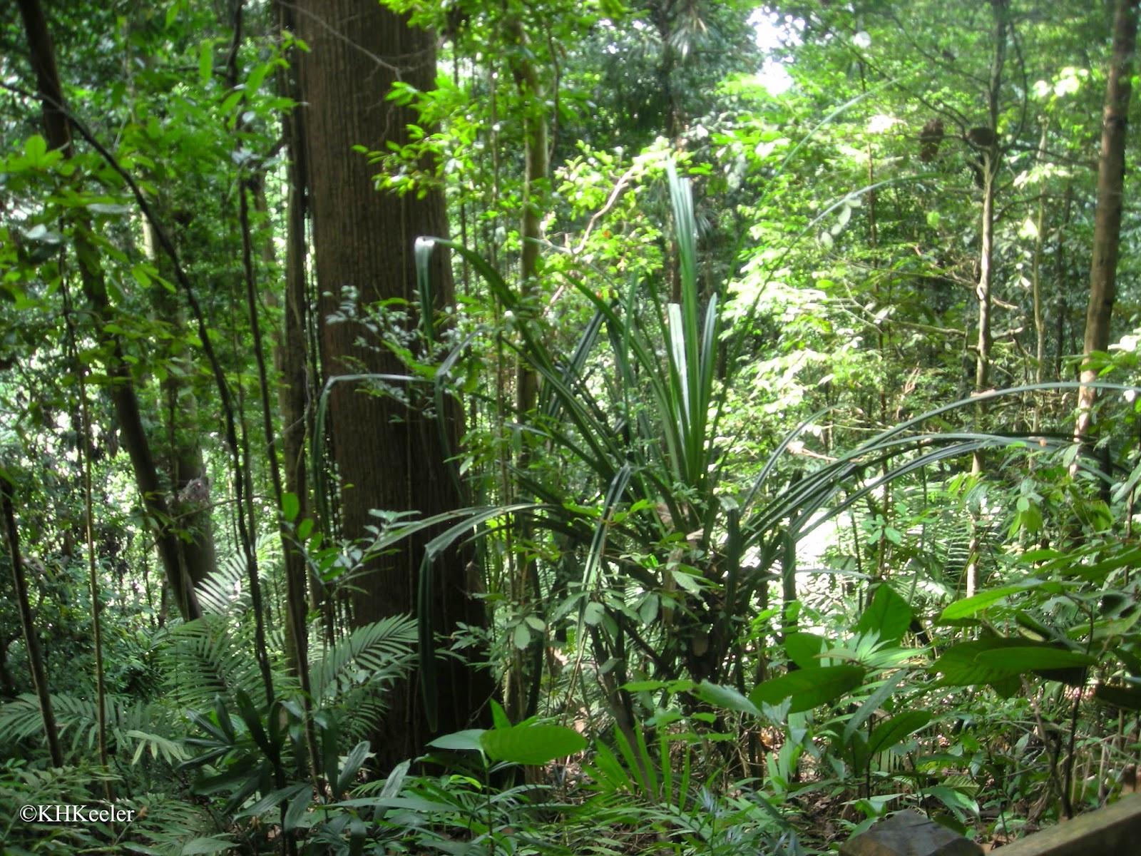 rainforest above Singapore