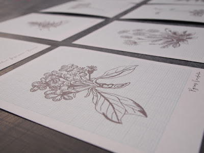 A6 botanical illustration cards at shop.alfies-studio.com