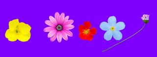 Kelopak Bunga Berguguran, blog, widget