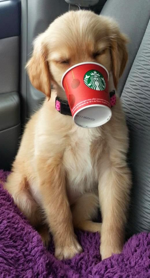 See more Cute puppy  http://cutepuppyanddog.blogspot.com/