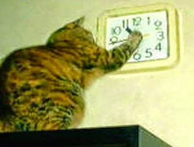 Cat stops clock alarm hour