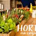 Como fazer horta de temperos na cozinha