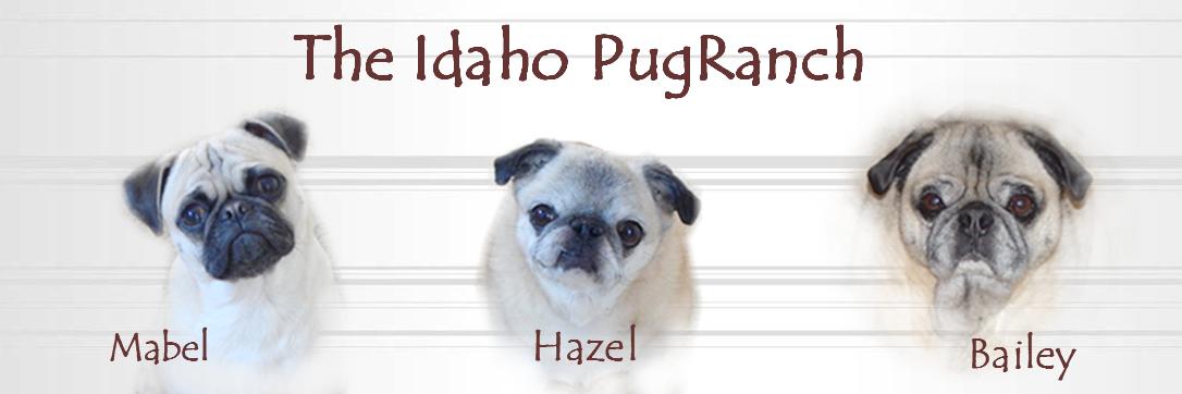 Idaho PugRanch