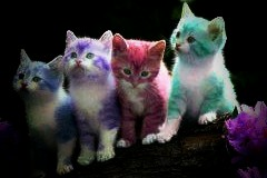 wel e to my madness rainbow kittens