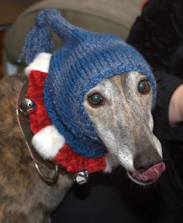 Crandall greyhound tries on Bettina's Christmas present
