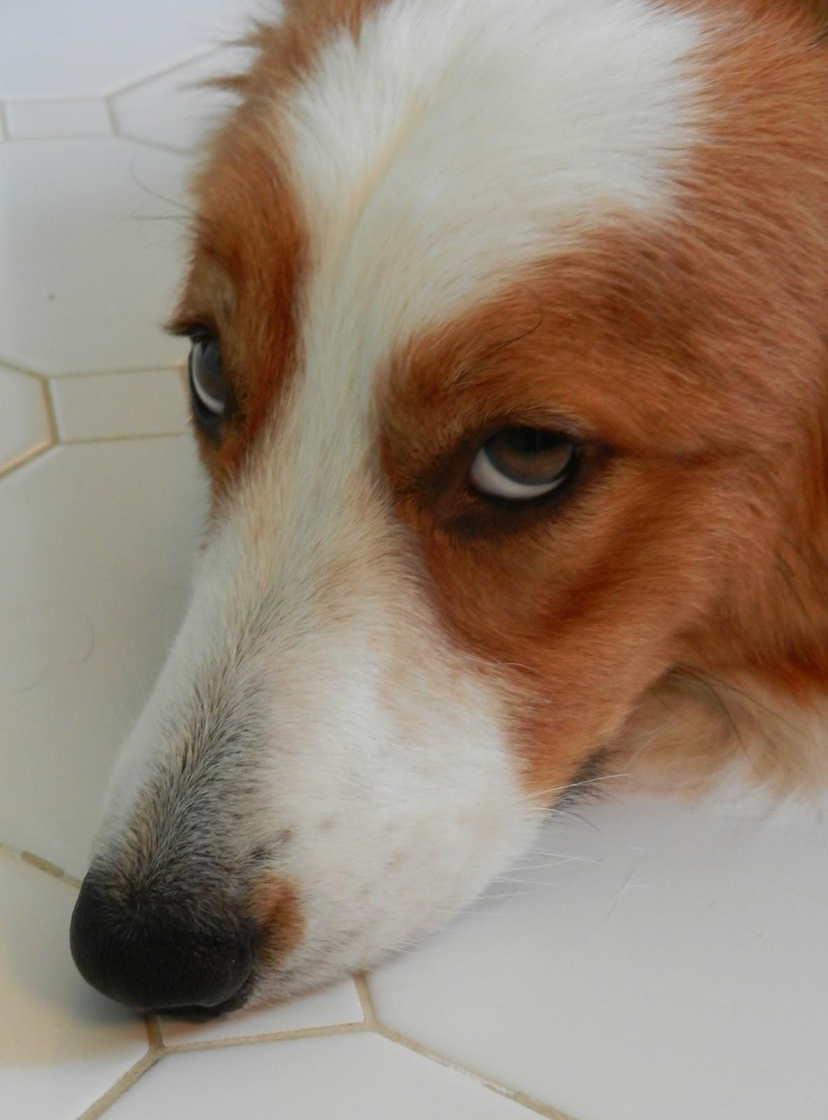 Image Result For Canned Pumpkin Dog