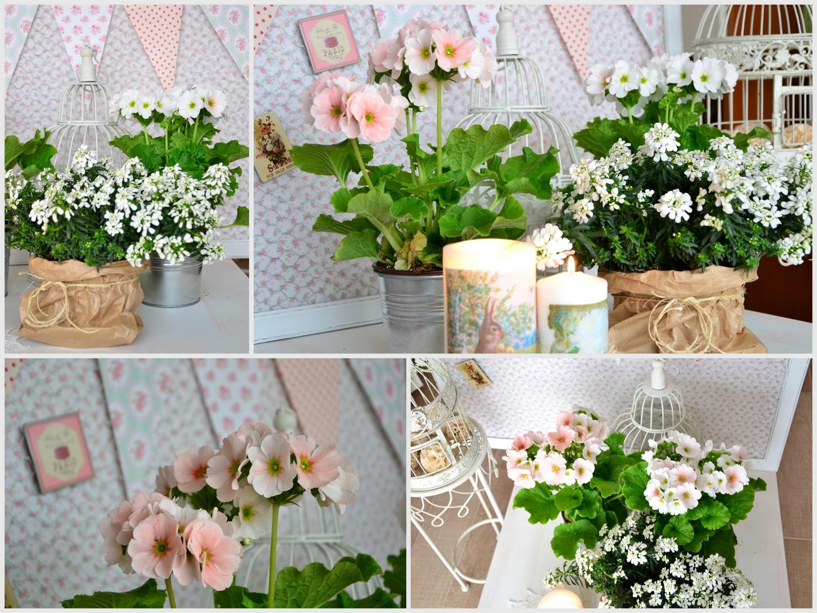 Shabbychiclife festa di primavera si parte fiori for Fiori di primavera
