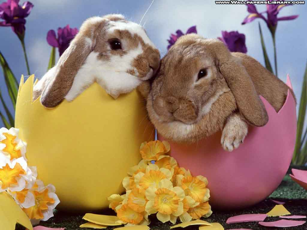 Frohe Ostern Grüße Wünsche